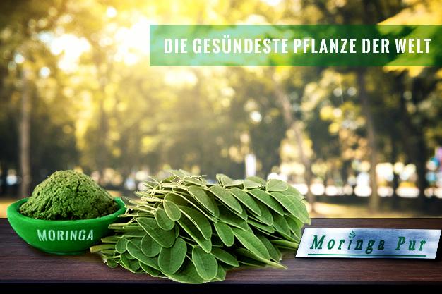 moringa oleifera blätter und pulver moringa pur