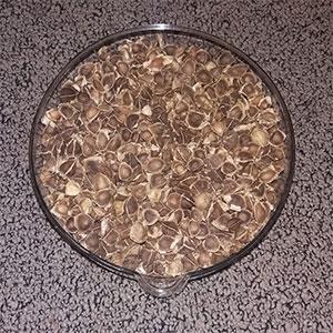 Moringa-Samen-kaufen-2